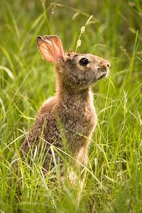 Morning Rabbit