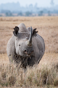 Black Rhino Country