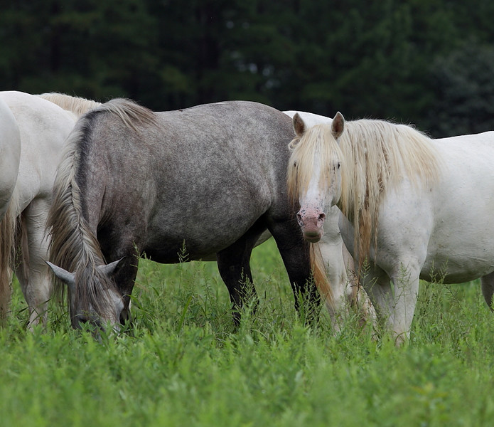 WL-104: Wild (Feral) Horses in Shannon County