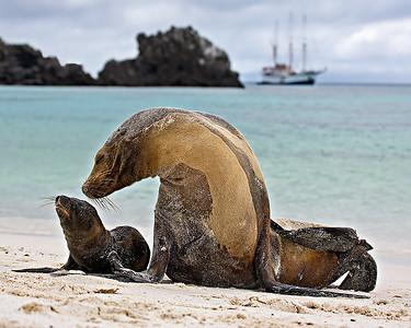 Sea Lions, Galapagos, Ecuador