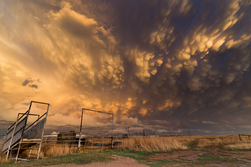 Brilliant mammatus clouds dominate the sunset over a feedlot near Adrian, TX, on June 6, 2014.