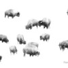 Bison in Snow Abstract