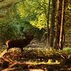 2014 - Magnifique 12 cors dans les derniers jours du brame en octobre