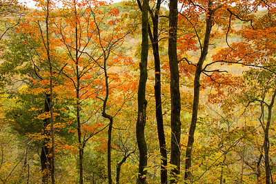 Autumn - Green River Bluff Trail