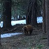 Apr 15, 2016  On the way home, we saw a bear walking in our driveway.