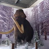 2018-01-07  First time seeing the Mammoth in dining area. Spent about 30 min in cafeteria with Kurt, Dean, LisaM, Craig & Leticia.