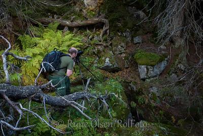 På jakt etter urørt skog