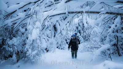 Vinterportal