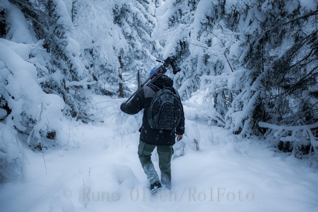 Inn i vinterskogen