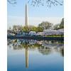 Washington Monument and Cherry Blossoms with reflection, Washington, DC