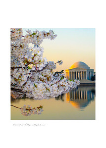 Jefferson Memorial and Cherry Blossoms, Washington, DC