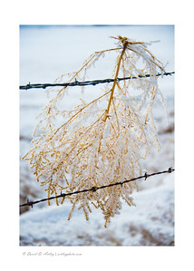 Ice coated tumble weed in barbed wire, San Luis Valley, CO