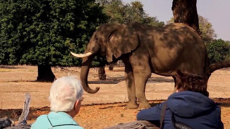 Marie watching an elephant.