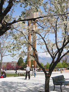 Bell tower and blossoms