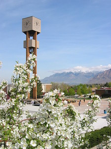 Blooms and the Bell Tower