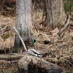 Manchester Cedar Swamp Preserve 54