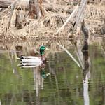 Manchester Cedar Swamp Preserve