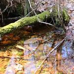 Manchester Cedar Swamp Preserve 31