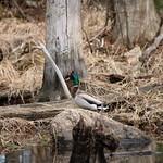 Manchester Cedar Swamp Preserve 51