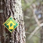 Manchester Cedar Swamp Preserve 22