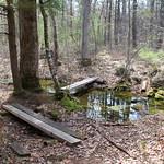 Manchester Cedar Swamp Preserve 17