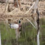 Manchester Cedar Swamp Preserve 63