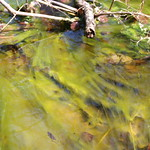 Manchester Cedar Swamp Preserve 20