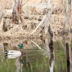 Manchester Cedar Swamp Preserve 66