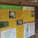 Manchester Cedar Swamp Preserve 4