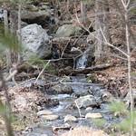 Manchester Cedar Swamp Preserve 69