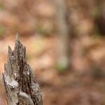 Manchester Cedar Swamp Preserve 24