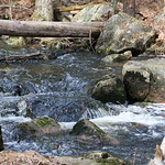 Manchester Cedar Swamp Preserve 39
