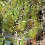 Manchester Cedar Swamp Preserve 21