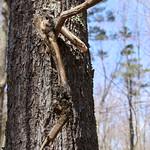Manchester Cedar Swamp Preserve 35