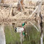 Manchester Cedar Swamp Preserve 67