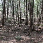 Manchester Cedar Swamp Preserve 38