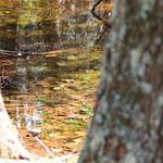 Manchester Cedar Swamp Preserve 32