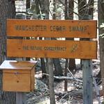 Manchester Cedar Swamp Preserve 5