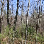 Manchester Cedar Swamp Preserve 13