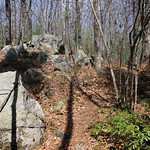 Manchester Cedar Swamp Preserve 33
