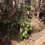 Manchester Cedar Swamp Preserve 30
