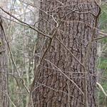Manchester Cedar Swamp Preserve 43