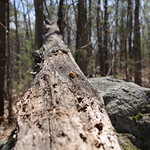 Manchester Cedar Swamp Preserve 12
