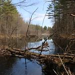 Manchester Cedar Swamp Preserve 40