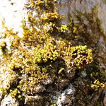 Manchester Cedar Swamp Preserve 34