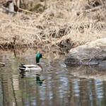 Manchester Cedar Swamp Preserve 47