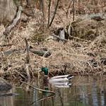 Manchester Cedar Swamp Preserve 49