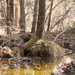 Manchester Cedar Swamp Preserve 27