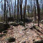 Manchester Cedar Swamp Preserve 9