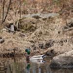 Manchester Cedar Swamp Preserve 48